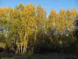Золотая осень (Узкое. Москва, фото 2015 г.)