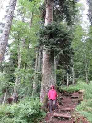 Реликтовый лес (Эстосадок)