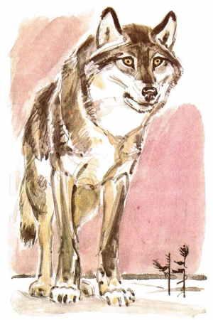 Белый Клык, художник Цигаль В. Е. (1916 – 2005)