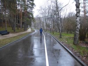 Кисловодск. Национальный парк «Кисловодский». Березовая аллея