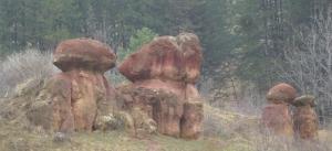 Кисловодск. Национальный парк «Кисловодский». Красные грибы