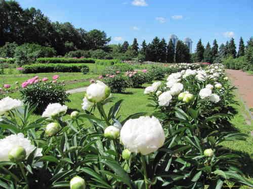 Ботанический сад МГУ. Вид сада