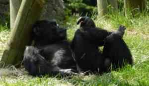 Труд создал человека из обезьяны