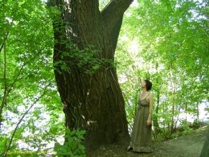 Нескучный сад. Огромное дерево, возможно со времен Демидовского сада