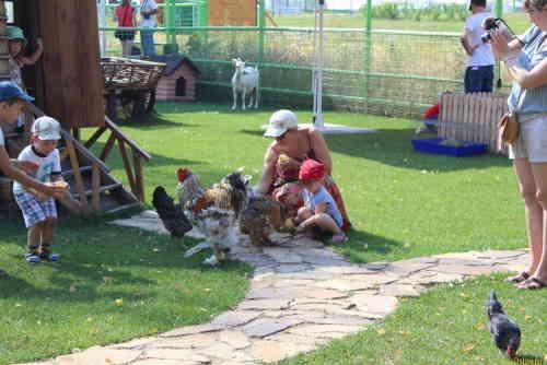 Национальный конный парк «Русь». Дети кормят животных